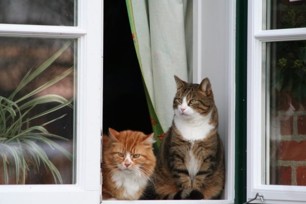 достаточно ли тепла привнесут окна, зависит от уплотнителей