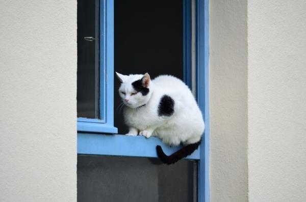 Такую конструкцию можно установить даже на дверь балкона - и домашний питомец на балкон не попадет
